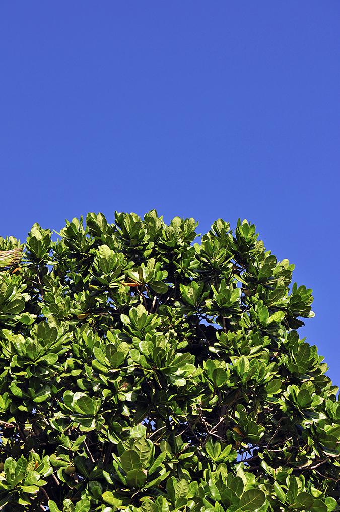 Kedungu Beach | Bali | Akanksha Redhu | leafy tree