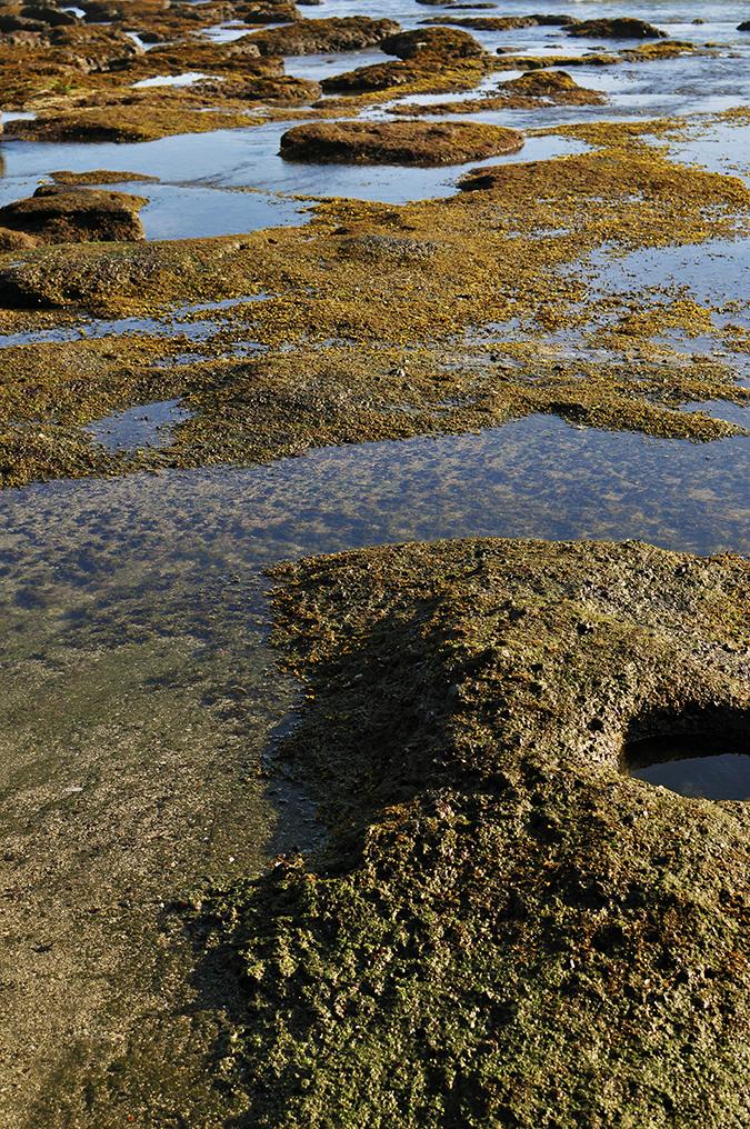 Kedungu Beach | Bali | Akanksha Redhu | moss and rock