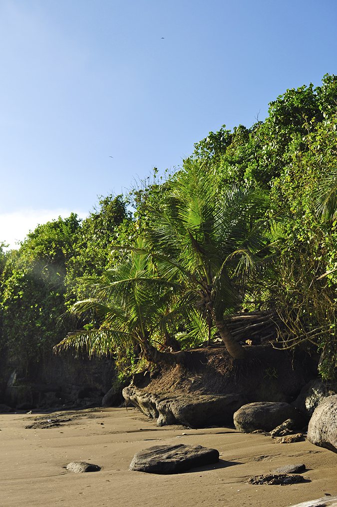 Kedungu Beach | Bali | Akanksha Redhu | against light palm growing on rock