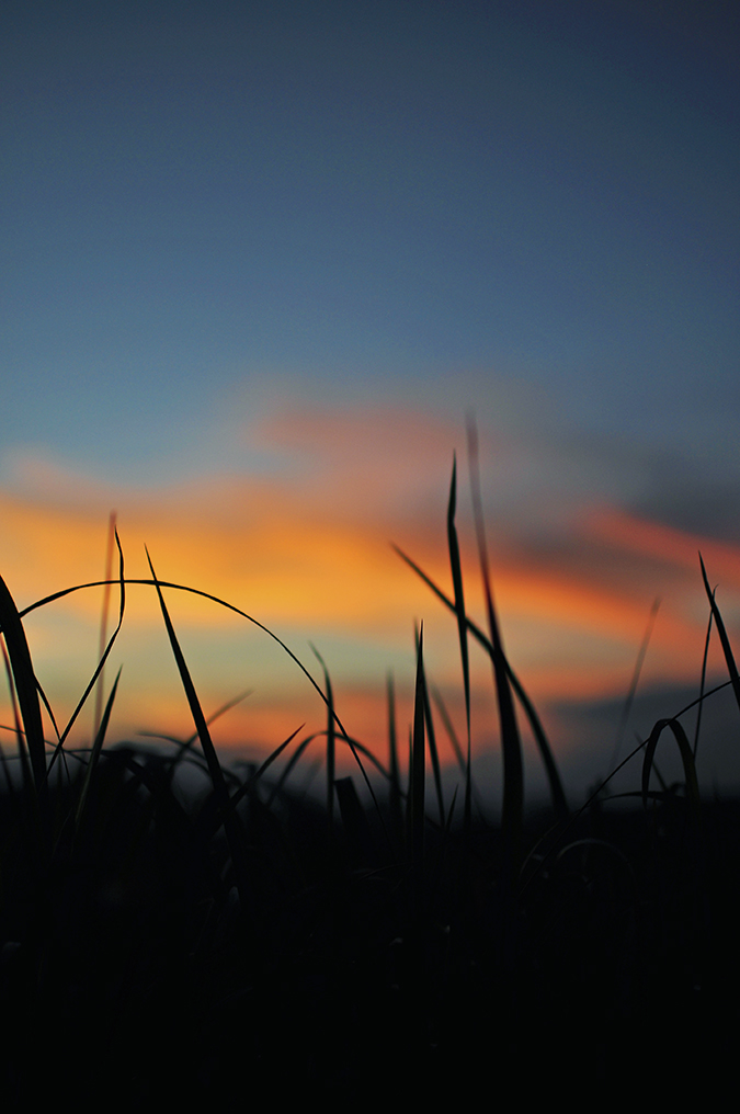 Kedungu Beach | Bali | Akanksha Redhu | post sunset grass
