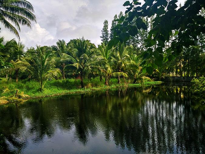 Baan Mai Khao | Phuket | Akanksha Redhu | lake while walking
