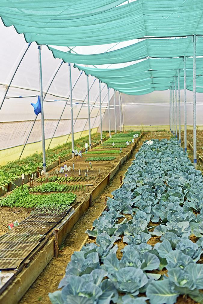 DYO The Organic Village Resort | Akanksha Redhu | kitchen garden