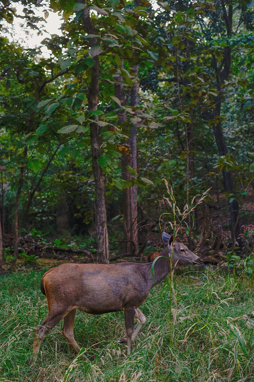 Pench Tree Lodge    Pugdundee Safaris 53
