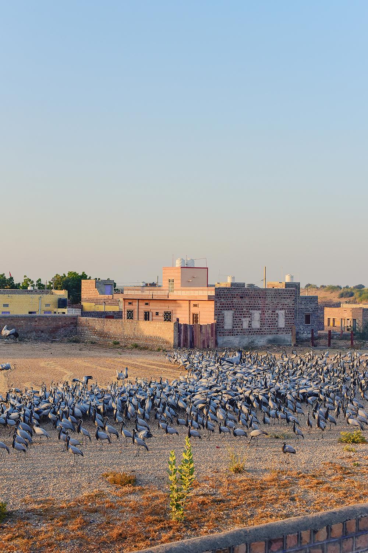 The Clement Retreats Rajasthan com Vilasa Luxury 19